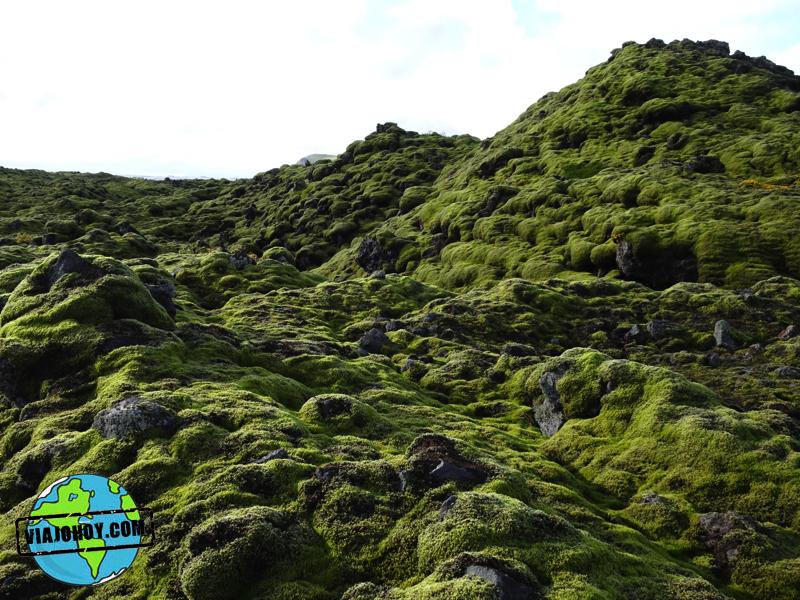 pradera-liquenes-islandia-viajohoy6